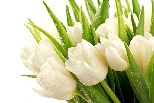 fototapeta na ścianę z bukietem tulipanów