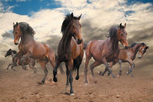 foto-tapet konie w galopie