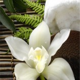 naklejka na drzwi orchidea
