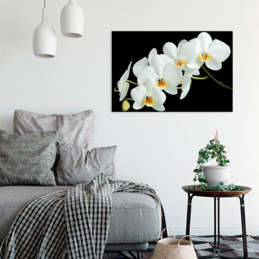 czarny obraz z białym kwiatem
