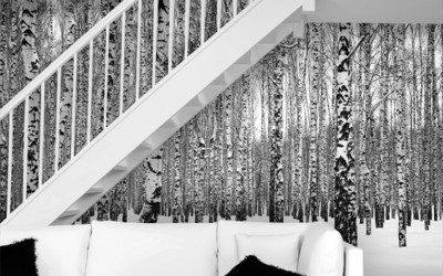 Fototapeta z brzozami – tania dekoracja