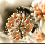 obrazy z pszczołą